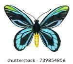 queen alexandra' s birdwing... | Shutterstock . vector #739854856