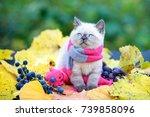 Autumn Portrait Of Little...