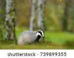 mammal in environment  rainy... | Shutterstock . vector #739899355