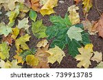 background of autumn leaves | Shutterstock . vector #739913785