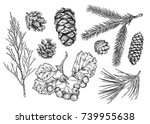 set of different branches  and... | Shutterstock .eps vector #739955638