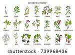 best herbs for flu treatment.... | Shutterstock .eps vector #739968436