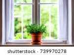 flowers at an old window   photo | Shutterstock . vector #739970278
