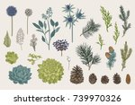 winter set. evergreen  cone ... | Shutterstock .eps vector #739970326