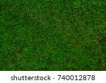 Fine Texture Of Green Moss