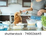 young woman with her dog is... | Shutterstock . vector #740026645
