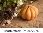 Stock photo funny cute kittens are playing with a pumpkin halloween party black kitten and a tricolor cat 740079076