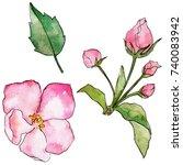 wildflower flowers of apple... | Shutterstock . vector #740083942