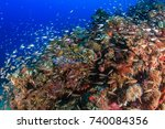 tropical fish and healthy...   Shutterstock . vector #740084356