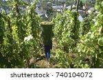 grape harvest in october at the ... | Shutterstock . vector #740104072