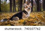 dog breed welsh corgi pembroke... | Shutterstock . vector #740107762