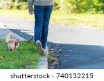 Stock photo young girl take the dog for walkies small cute chihuahua on the lead 740132215