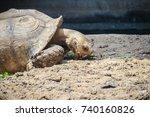 giant african spurred tortoise  ... | Shutterstock . vector #740160826