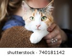 cat lies on woman's hands. the... | Shutterstock . vector #740181142
