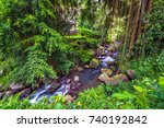 forest river  with hanging... | Shutterstock . vector #740192842