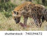 hyena eating  africa | Shutterstock . vector #740194672