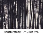 bamboo is shining | Shutterstock . vector #740205796