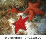 Cluster of starfish