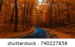 Road Through Dark Night Forest...