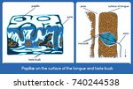 papillae on the surface of the... | Shutterstock .eps vector #740244538