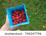 Small photo of Hand holding a container of ripe fresh picked raspberries at a pick your own farm.