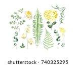 Botanical Set Of Eucalyptus...