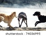 Stock photo three dog playing and fighting outdoors natural colors and light 74036995