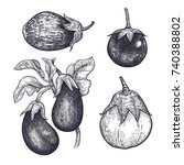 eggplants set. hand drawing of... | Shutterstock .eps vector #740388802