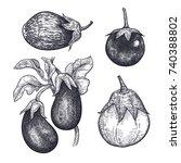 eggplants set. hand drawing of... | Shutterstock .eps vector #740388802