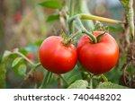home grown tomato vegetables... | Shutterstock . vector #740448202