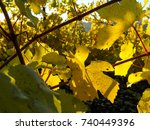 a golden leaf on a grapevine... | Shutterstock . vector #740449396