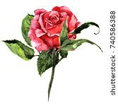 Isolated Red Watercolor Rose...