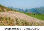 field of buckwheat flowers at... | Shutterstock . vector #740609842