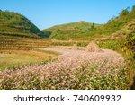 field of buckwheat flowers at... | Shutterstock . vector #740609932