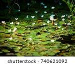 danube delta  tulcea  romania | Shutterstock . vector #740621092
