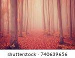 Autumn Foggy Mystical Forest I...