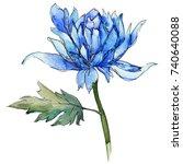 wildflower chrysanthemum flower ... | Shutterstock . vector #740640088