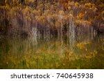 Colorful Autumn Trees...