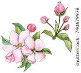 wildflower flowers of apple... | Shutterstock . vector #740679976