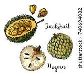 jackfruit. fruits drawn by a... | Shutterstock .eps vector #740694082