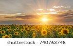 beautiful sunflowers in the... | Shutterstock . vector #740763748