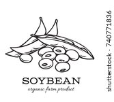 vector hand drawn soybean for... | Shutterstock .eps vector #740771836