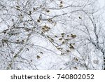 sparrows in the winter morning... | Shutterstock . vector #740802052