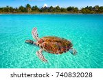 Holbox Island turtle photomount in Quintana Roo of Mexico