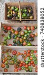 Small photo of historic old tomato variety Different varieties of tomatoes rare species
