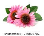echinacea flowers close up...   Shutterstock . vector #740839702