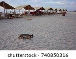 dogs sleep on the beach with... | Shutterstock . vector #740850316