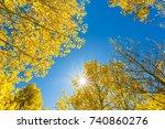 Bright Sunshine Through Golden...
