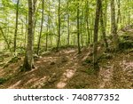 oak and beech tree forest | Shutterstock . vector #740877352