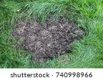 repairing lawn bare patch with... | Shutterstock . vector #740998966